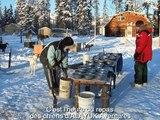 Chien de traîneau - Repas des chiens - Alayuk Aventures - Yukon 2009