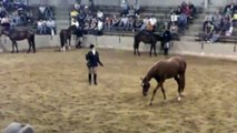 2010 Quarter Horse Congress Open English Longe Line Stakes Class- Shocked ToBe Invited