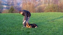 Puppy Obedience Training - 7 months old female German Shepherd / Michalus Training