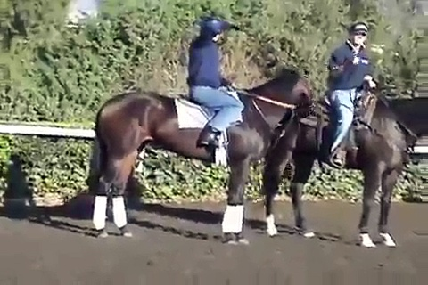 The Best Horse Racing Video Of All Time