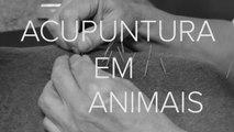 Acupuntura é usada em animais para traumas e dores