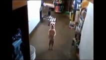 Funny Dogs Dancing   Funny Dog Dancing Compilation 2015