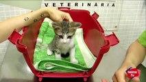 Cuidar a un gatito en sus primeras semanas - Mascotas Nestlé TV