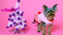 "Dogs Sing ""12 Days of Christmas"" Funny Christmas Song!"