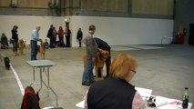 DKK udstilling Herning 6 november 2010 Broholmer Zeus