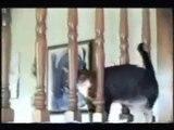 ils sont fous ces chats ! [2]