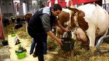 Vaches sur la Sima - Cows Sima Paris - Koeien op de Sima in Parijs