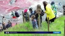 500 dauphins et baleines pilotes massacrés aux Île Féroé