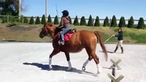 Me trotting over a trotting pole on Sushi(am i a bad rider?)