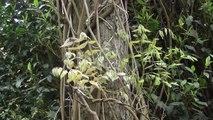 (HD56) Le jardin du levant : visite du jardin japonais