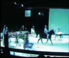spectacle de cheval passion 2008 du mercredi 16 janvier08