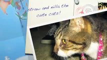 straw and nilla the cute cats!