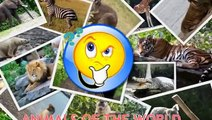 Animals for Kids | Animals of the World for Kids | Learn Animals | Animals in English