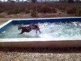 MDR ! Je n'ai jamais vu un chien s'amuser autant avec de l'eau !