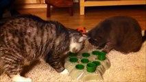 Stimulo: jeu pour chats / Cat feeding toy: Stimulo