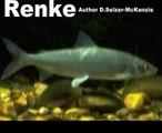Renke Fische Tiere Animals Natur SelMcKenzie Selzer-McKenzie