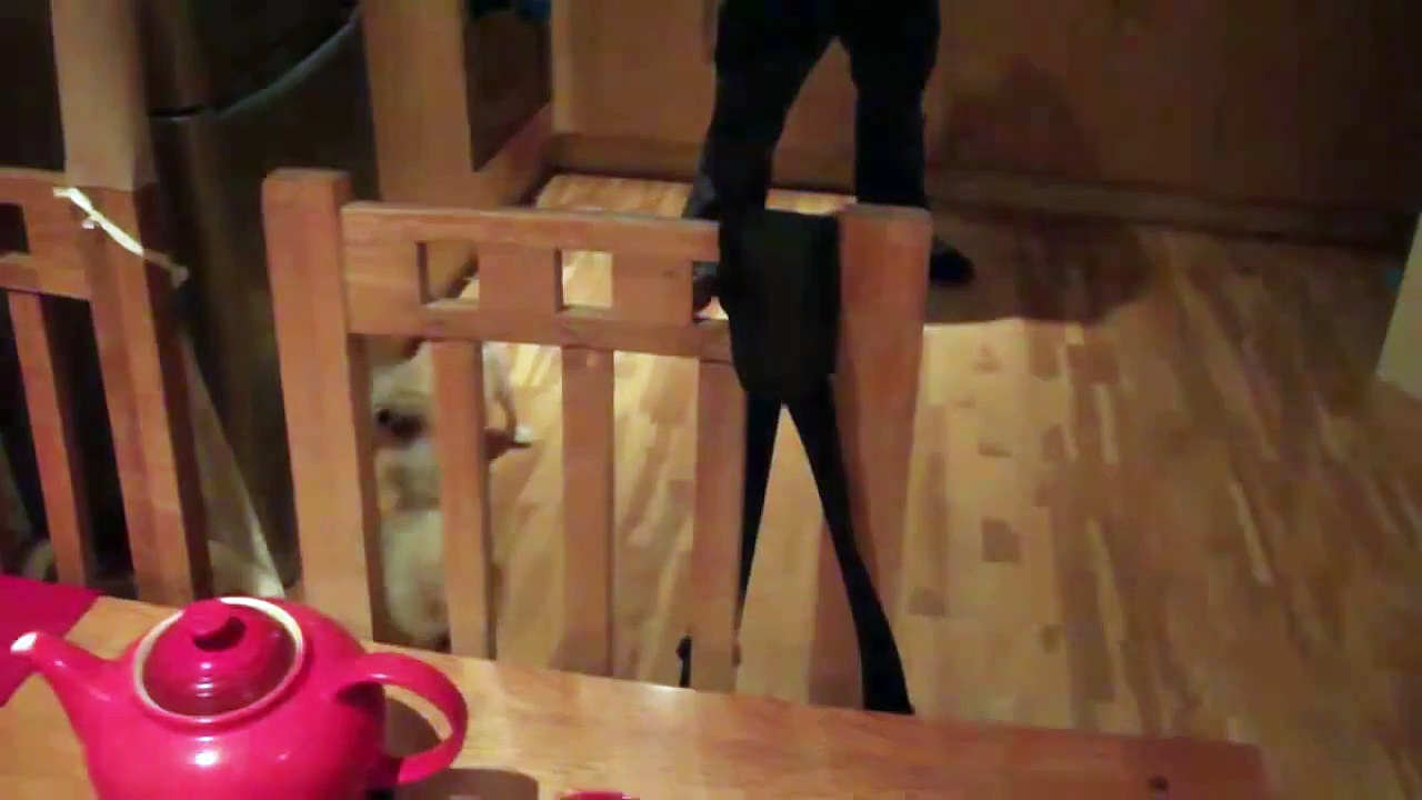 MALTESE PUPPY: SINA'S FIRST BARK