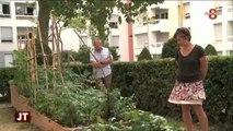 Développement durable : Des jardins partagés à Annemasse