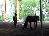 Azoulé cheval de Merens dressé par Alegria