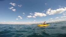 Up-close encounter with shark off Florida coast