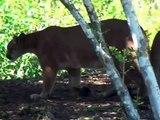Animal Documentary Channel 2015 Wild Life Documentary Animal Documentary National Geog