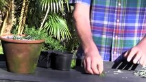 PLANTS FOR FREE - ROOTING CUTTINGS