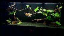 500 lt Goldfish webcamera 007