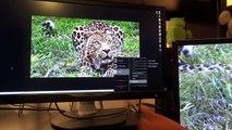 My opinion on 60hz vs 120hz/144hz (and 1080p vs 4k) - video