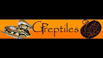 Reptile Incubator is ready to use!