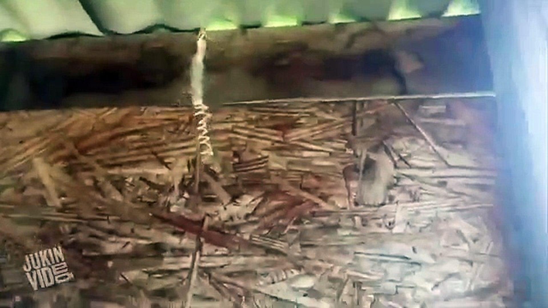 En cámara lenta: Así es como una araña envuelve a su presa