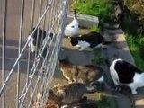 gatos callejeros. Estaba el señor don gato (Rosa León)