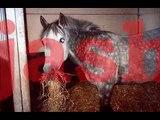 Alle paarden ponys shetlanders van Hcb.