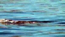 Gray Whale Watching - Dana Point - Dana Wharf Whale Watching