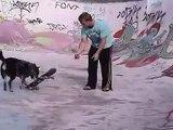 dog rides skateboard in half pipe