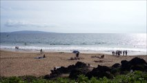 Maui's Best Webcam ~ Charley Young Beachcam ~ Hawaii Webcam