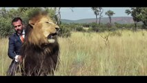 Travel Wild animal  ,   Visit Wild animal ,  Wild Animal Lions ,  Wild Animal Video Lions ,  Wild Vision