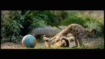WHISKAS® Nederland - Big Cat Kitten Commercial (2014)