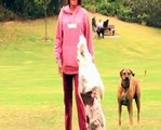 Funny Dog Video - Australian Shepherd Plays Football aka Soccer