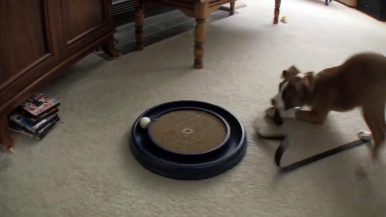 """Dog says """"Cat toys make me pee"""""""