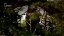 Documentary Animals Documentary Animals National Geographic Wild Animal Documentary Amazon