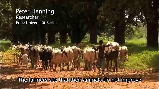 Livestock Keeping In the Tsetse Belt of West Africa