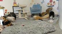 Tiny Kittens Slow Mo-Puffy kittens hilarious