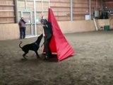 Training in Finland 20th - 23th March 2009 - bitehelper Ludek Silhavy