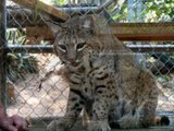 Nobody's Child - The Alexander Brothers - Wildlife Waystation