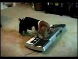 Silly dog plays Prokofiev - Toccata Op. 11