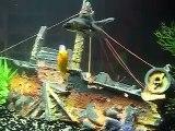 Aquarium 120 L, poissons rouges, comete, Shubukin et...