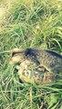 Turtle Surfing :D