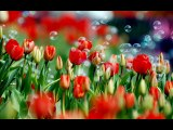 [Heavenly Revelations] Flowers In Heaven Were Giving Glory To God