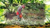 Sequoia, des arbres pour l'homme, des hommes pour l'arbre