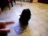il mio cane che fa il morto quando faccio finta di sparargli